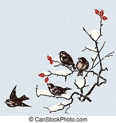 sparrows in december