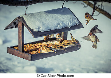 Sparrows on a feeder in winter day