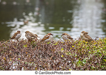 Sparrows on the bushes