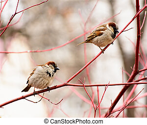 sparrows sitting on a tree