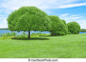 spazioso, prato verde, con, bello, albero