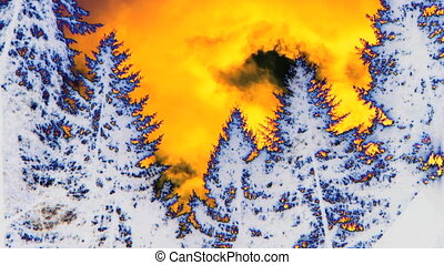 Special Effects forest, time lapse - Special Effects forest...
