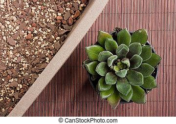 Special primer in a ceramic vase for planting Echeveria.
