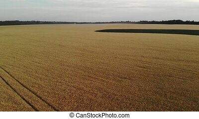 Species in the air of field with ripe rye in Russia, -...
