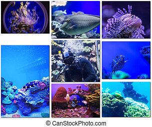 species of life underwater world