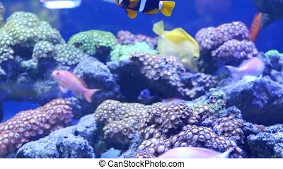 Species of soft corals and fishes in lillac aquarium under ...