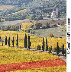 spectacular, 조경술을 써서 녹화하다, 의, 그림 같은, tuscan, 포도 동산, 에서, 가을
