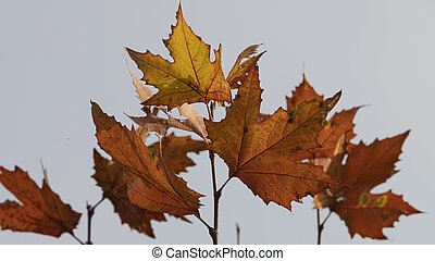 spectacular autumn colors of the leaves