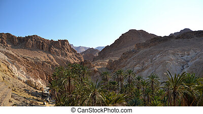 Spectacular Canyon Mides and green palm trees - Tunisia, ...