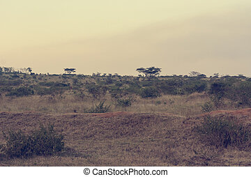 Spectacular landscape of savannah covering hills during dry season.