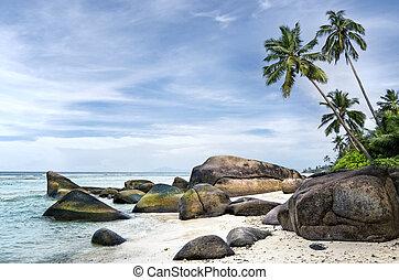 Spectacular palm-fringed beach of tropical island