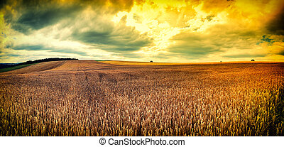 Spectacular sunset over wheat field