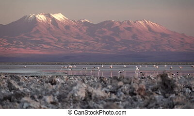 Spectacular view of salt lake with flamingoes and volcano - ...