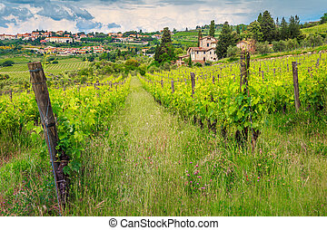 Spectacular vineyard with stone houses, Chianti region, Tuscany, Italy, Europe