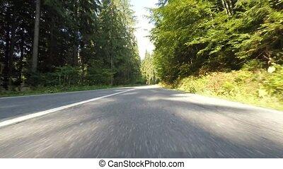 Speeding car trough fir forest, front camera video