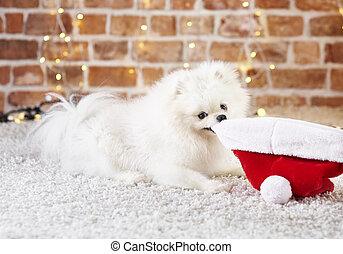 speels, puppy, hoedje, spelend, kerstman