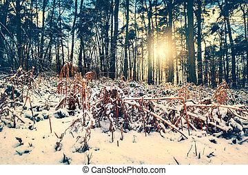 spektakulär, solnedgång, över, vinter, skog