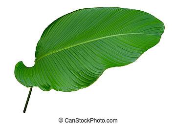 spelden, bladeren, isoleren, ornata, streep, achtergrond,...