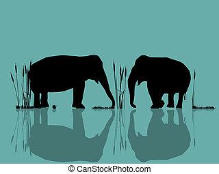 spelend, olifanten, water