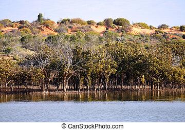 spencer, austrália, mangroves, topo, oceânicos, outback, ...