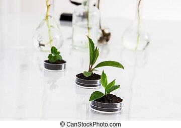 sperimentare, con, flora, in, laboratory.