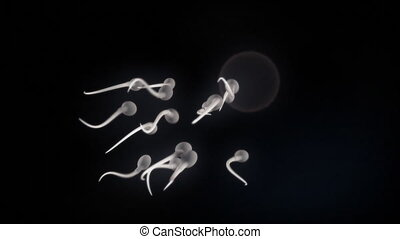 Sperm and Egg - 1080p Stock video of sperm cells swimming to...