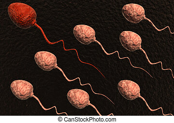 sperm cells competing and red one winning