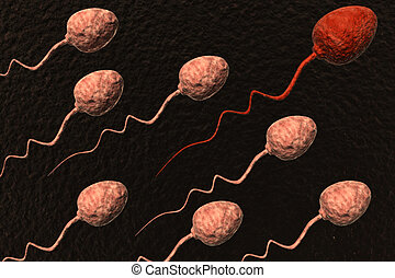sperm cells competing - sperm cells competing and red one...