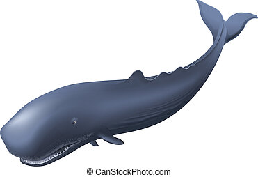 Sperm Whale - Illustration of a sperm whale