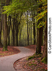 Path for bicycles through the forest