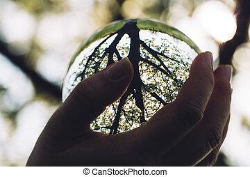 sphère, femme, tenant verre, main
