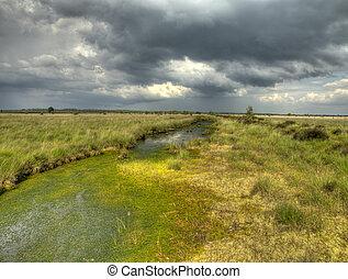 Sphagnum acid bog - Swamp National Park in the Netherlands