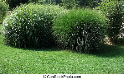 spherical grass plants - sunny illuminated scenery including...
