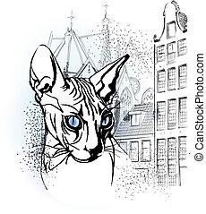 sphinx cat in the old European city