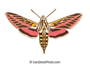 Sphinx Moth Arizona Computer Painting