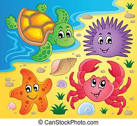 spiaggia, 3, animali, corazze marittime