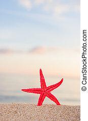 spiaggia, alba,  starfish