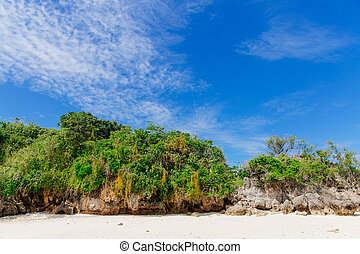spiaggia bianca, paesaggio, di, il, corallo, costa, di, figi