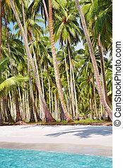 spiaggia, boschetto palmo, tropicale