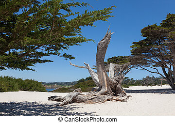 spiaggia, carmel, california, carmel