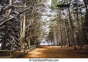 spiaggia, cipresso, albero, california, foresta, muschio