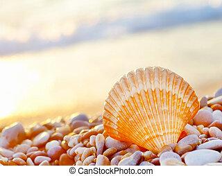 spiaggia conchiglia
