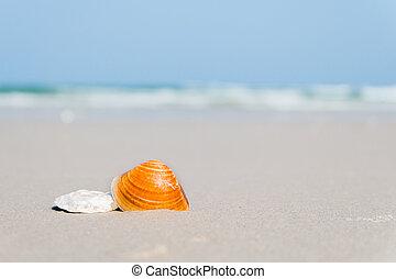 spiaggia conchiglia, mare
