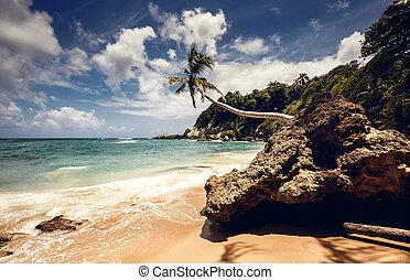 spiaggia, e, oceano, repubblica domenicana
