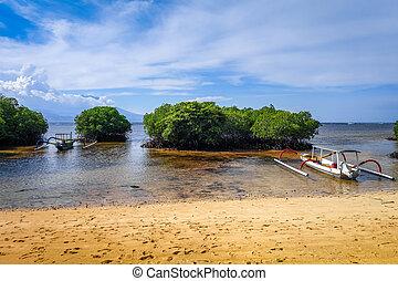 spiaggia, isola, indonesia, nusa, mangrovia, bali, lembongan