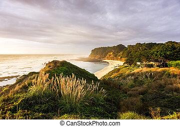 spiaggia, luce, giorno nuvoloso, tramonto, muschio, california