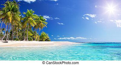 spiaggia palma, in, paradiso tropicale, -, guadalupe, isola, -, caraibico