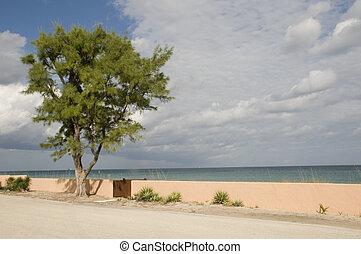 spiaggia palma occidentale, in, florida