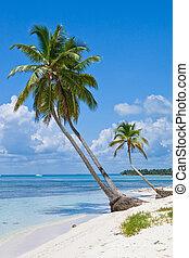 spiaggia sabbia, palme, verde bianco