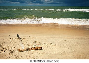 spiaggia sabbia, penna